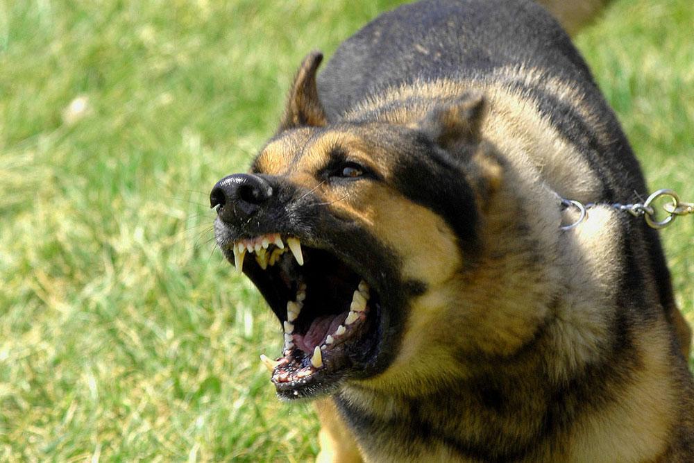 Cbd For Dog Aggression