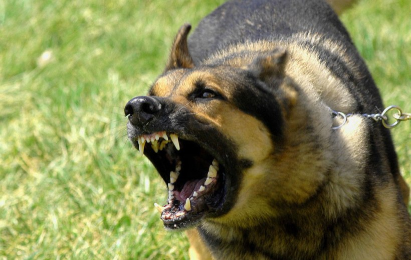 Cbd For Dog Aggression