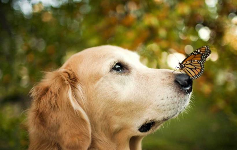 12 Amazing Benefits Of CBD Oil For Dogs