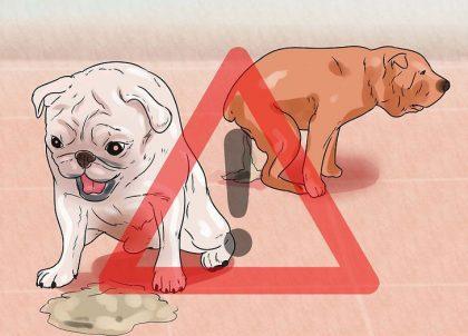 dog-nausea-cbd