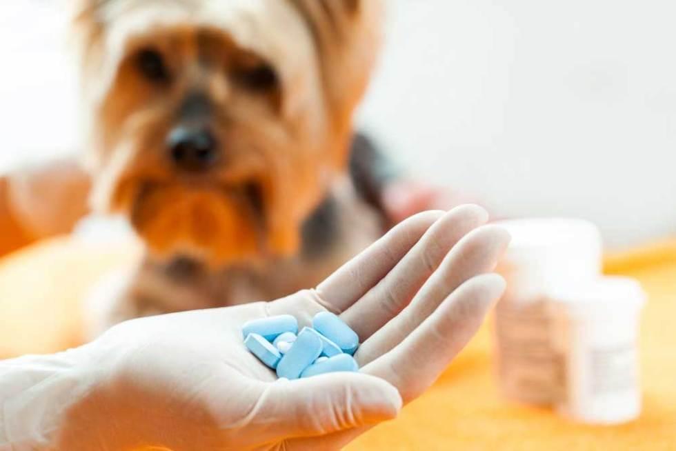 pills and dogs nsaids cbd