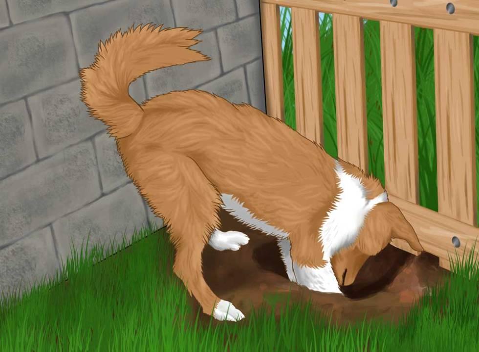 separation-anxiety-cbd-dogs