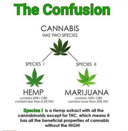 difference-between-hemp-and-marijuana
