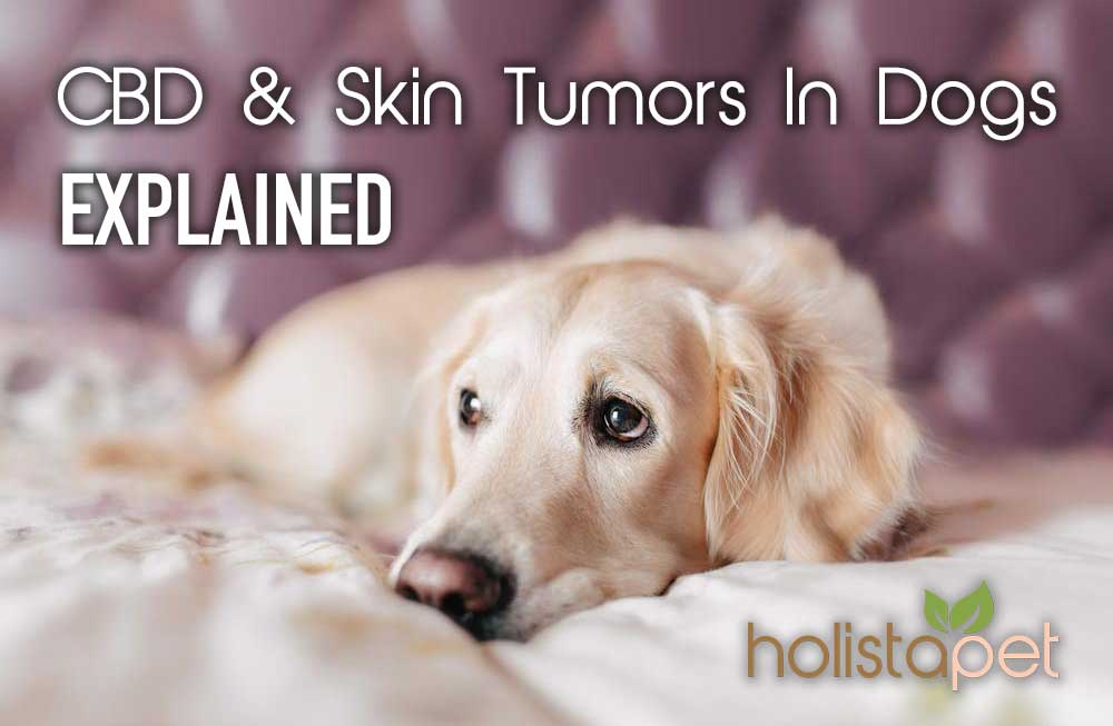 cbd-and-skin-tumors-in-dogs-explained