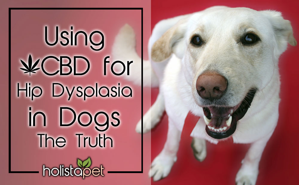 Using CBD For Hip Dysplasia In Dogs Get The Truth