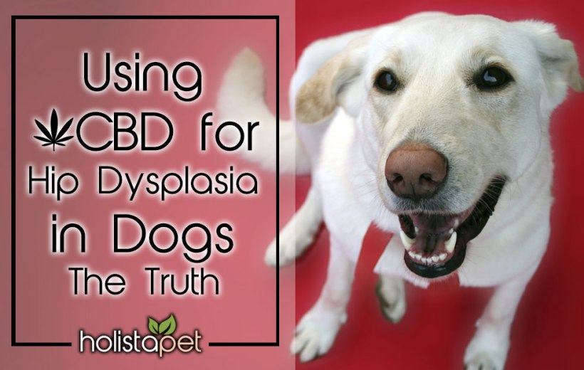 Using CBD For Hip Dysplasia In Dogs – The Truth