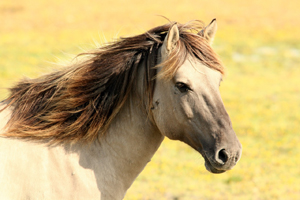 Herbal Treatments for Horses