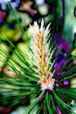 How Bach Flower Pine supports natural healing in horses