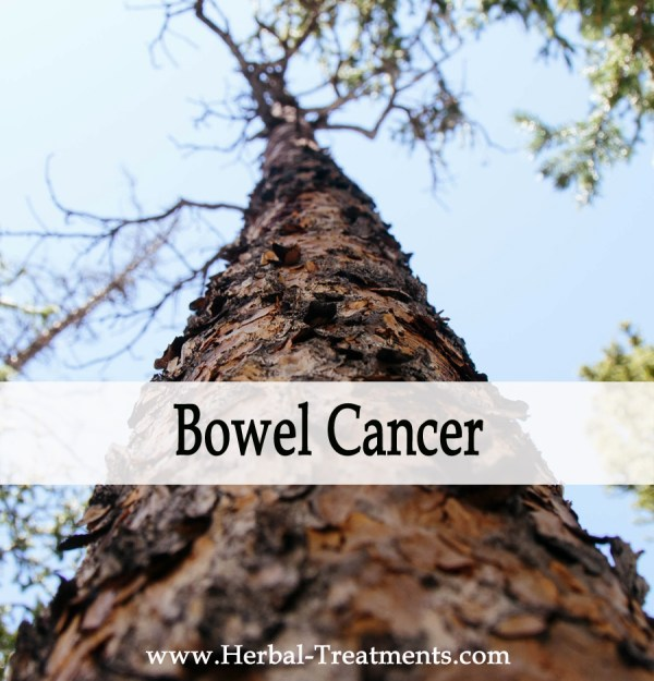 Herbal Medicine for Bowel Cancer Recovery & Prevention