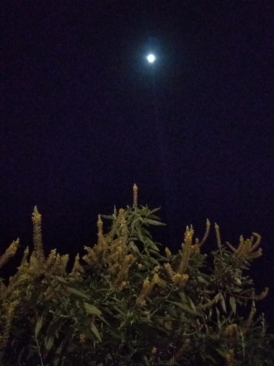 buddleia-moon-nerve-ending-regeneration.jpg