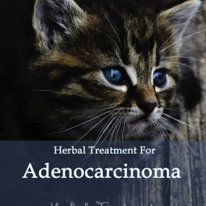 Herbal Treatment for Cancer - Adenocarcinoma in Cats