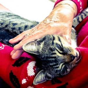 Herbal Treatments for Feline Heart, Blood and Circulatory Conditions