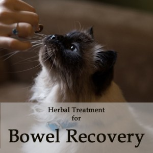 Herbal Treatment for Bowel Recovery in Cats