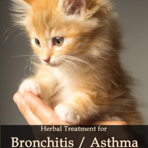 Herbal Treatment for Bronchitis / Asthma in Cats
