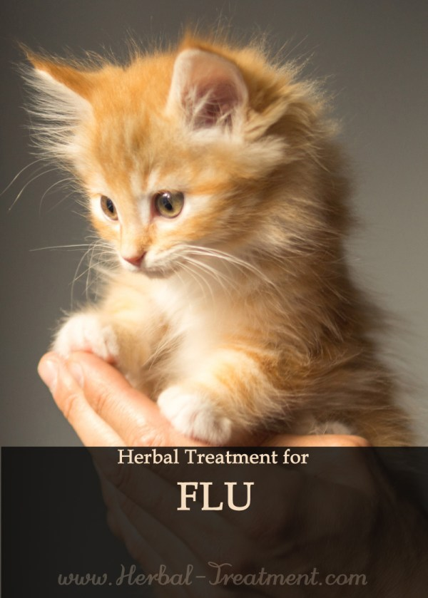 Herbal Treatment for Flu in Cats