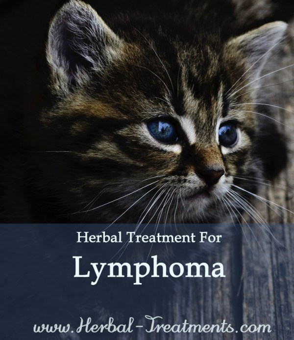 Herbal Treatment for Cancer - Lymphoma Cancer in Cats