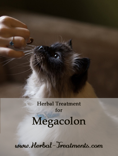 Herbal Treatment for Megacolon in Cats
