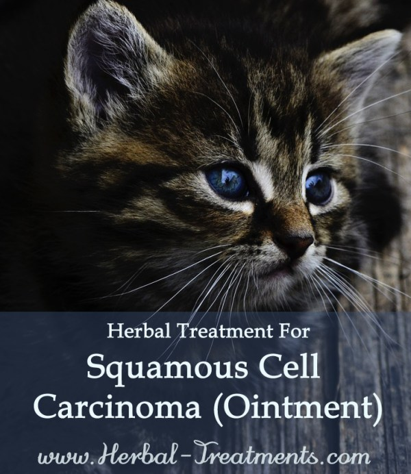 Herbal Treatment for Cancer - Squamous Cell Carcinoma Ointment for Cats