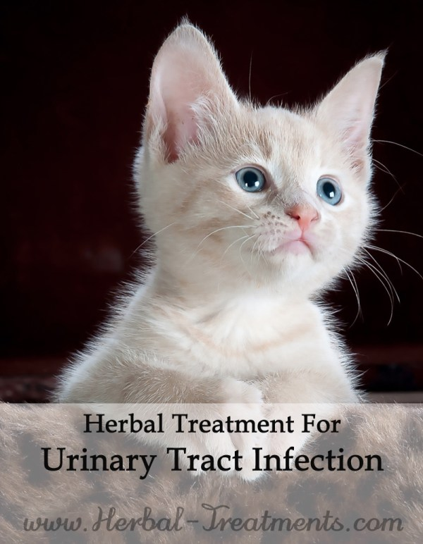 Herbal Treatment for Feline Urinary Tract Infection in Cats