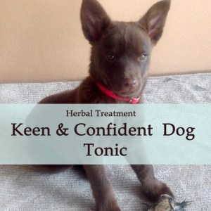 Keen and Confident Dog Tonic