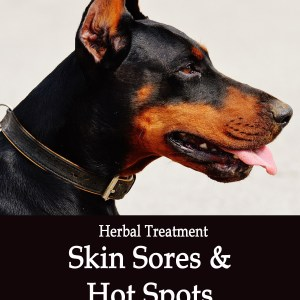 Herbal Blood Detoxifier - Skin Sores and Hot Spots in Dogs