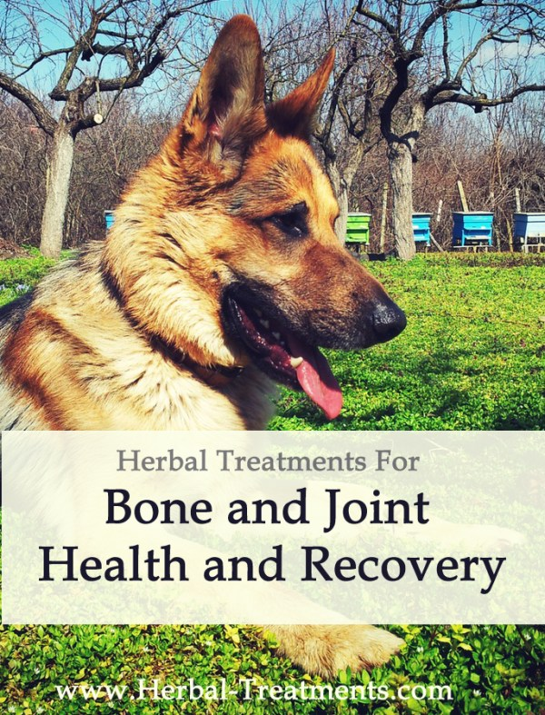 Bone and Joint Health and Recovery in Dogs