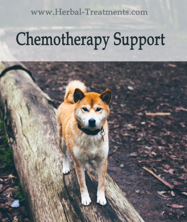 Herbal Treatment For Chemotherapy Side-Effects & Recovery in Dogs