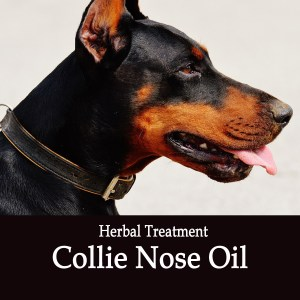 Collie Nose Oil