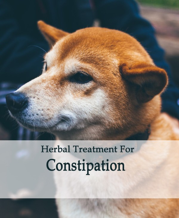 Herbal Treatment for Constipation in Dogs