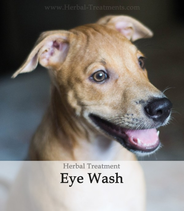 Herbal Treatment - Eye Wash for Dogs