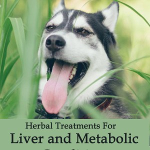 Herbal Treatments for Canine Liver and Metabolic Conditions