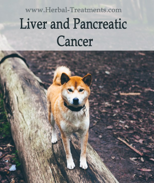 Herbal Treatment for Cancer - Liver and Pancreatic Cancer in Dogs