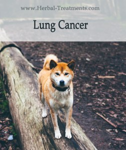 Herbal Treatment for Cancer - Lung Cancer in Dogs