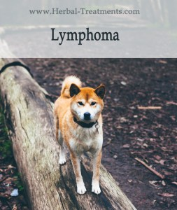 Herbal Treatment for Cancer - Lymphoma Cancer in Dogs