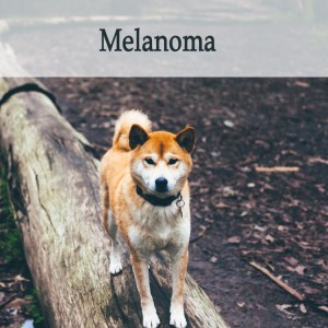 Herbal Treatment for Cancer - Melanoma in Dogs