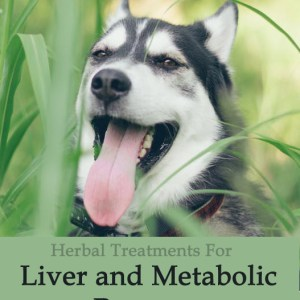 Herbal Treatment for Liver and Metabolic Recovery in Dogs