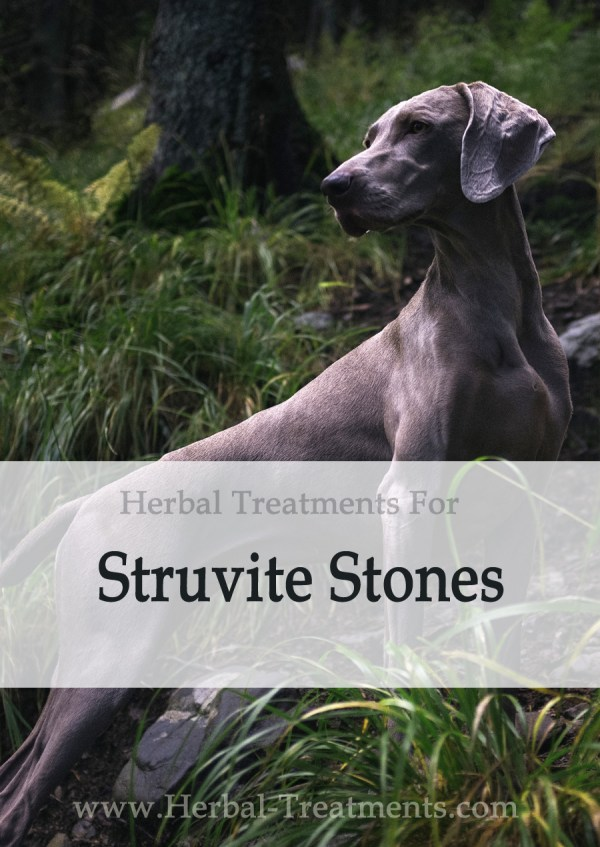 Herbal Treatment for Struvite Stones in Dogs