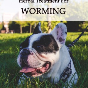 Herbal Treatments for Canine Worming