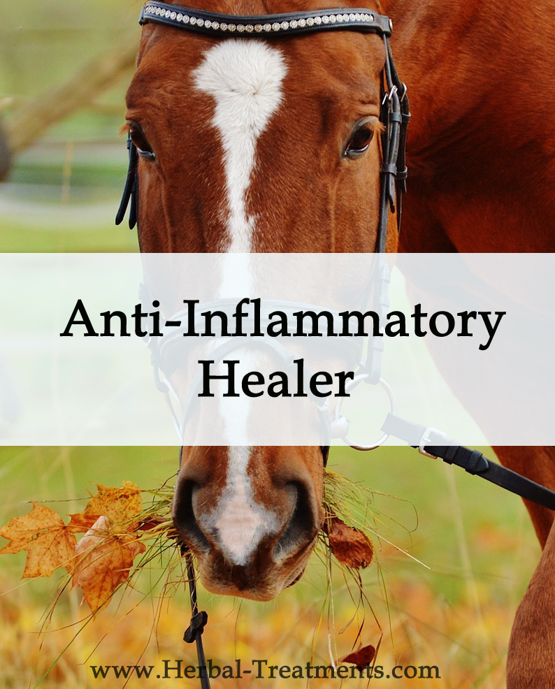 Herbal Treatment - Anti Inflammatory Healer for Horses