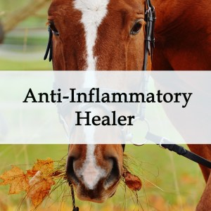 Herbal Treatment - Anti Inflammatory Healer for Horses