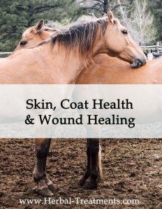 Herbal Treatments for Equine Skin, Coat Health and Wound Healing