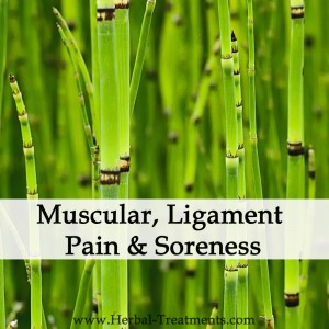 Herbal Medicine for Muscular/Ligament Pain & Soreness (Over-strain)