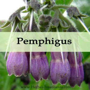 Herbal Medicine for Pemphigus Blisters