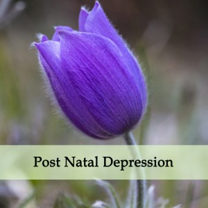Herbal Medicine for Post Natal Depression