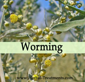 Herbal Treatments for Worming