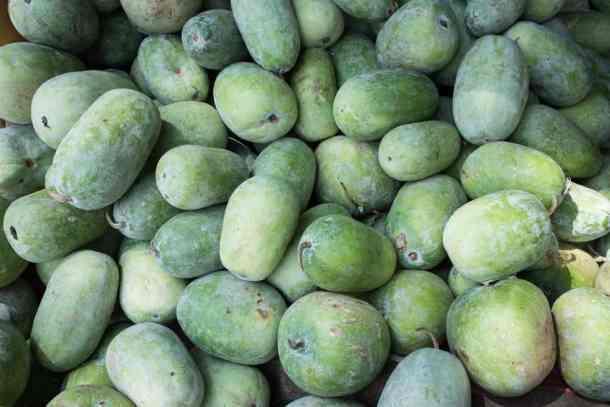 ash-gourds-after-harvesting