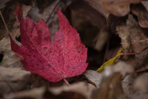 color meanings of autumn 1