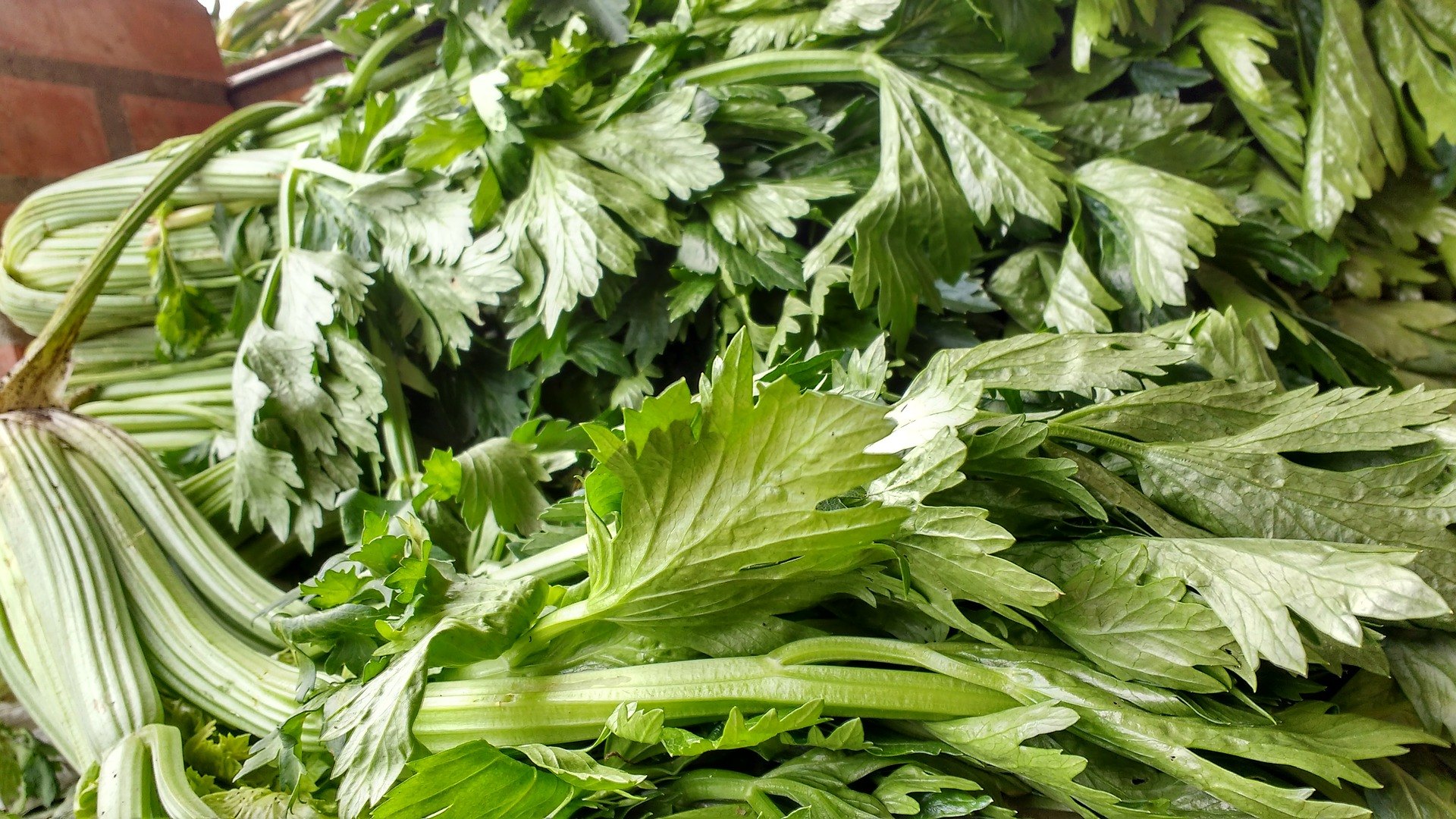 Celery Nutrition and Benefits