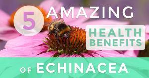 Five Amazing Benefits of Echinacea