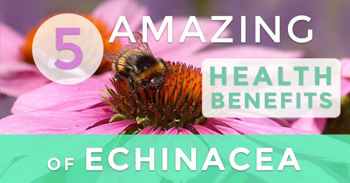 Five Amazing Benefits of Echinacea